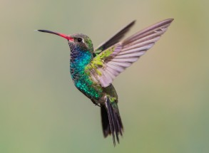 hummingbirdreal